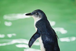 Penguin-Island.jpg